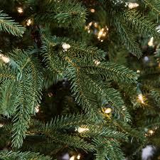 Fraser Fir Christmas Trees by Frasier Grande Full Pre Lit Christmas Tree Hayneedle