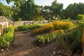 Pumpkin Patch Denver Botanic Gardens by Agriculture Past U0026 Present Denver Botanic Gardens