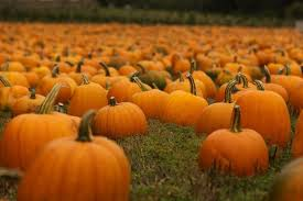 Pumpkin Picking Nj 2015 by Don U0027t Miss These 10 Great Pumpkin Patches In Sc This Fall