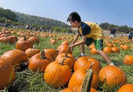 Pumpkin Patch Cal Poly Pomona by 12 Only In L A Things To Do During Autumn In Southern California