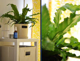 Plants For Bathrooms With No Light by Plants In Bathroom No Light Bathroom Trends 2017 2018