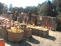 Half Moon Bay Pumpkin Patches 2015 by Arata Pumpkin Patch Half Moon Bay Youtube