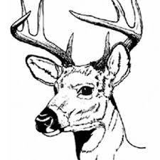 Deer Antler Coloring Page Sun