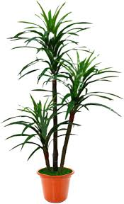 sz palme kentia mit kunststofftopf dekoration haus
