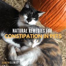 Using Pumpkin For Dog Constipation by Constipation Remedies For Pets