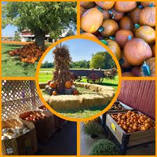 Pumpkin Patch Miami Lakes by Garden Thyme With Diana 2016
