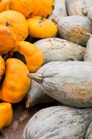 Types Of Pumpkins And Squash by Fall Adventures The Ludwigsburg Pumpkin Festival Journey U0026 Camera