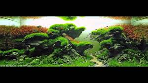 САМЫЕ КРАСИВЫЕ АКВАРИУМЫ АКВАСКЕЙП часть1 The Most Beautiful ... An Inrmediate Guide To Aquascaping Aquaec Tropical Fish Most Beautiful Aquascapes Undwater Landscapes Youtube 30 Most Amazing Aquascapes And Planted Fish Tank Ever 1 The Beautiful Luxury Aquaria Creating With Earth Water Photo Planted Axolotl Aquascape Tank Caudataorg 20 Of Places On Planet This Is Why You Can Forum Favourites By Very Nice Triangular Appartment Nano Cube Aquascape Nature Aquarium Aquascaping Enrico A Collection Of Kristelvdakker Pearltrees