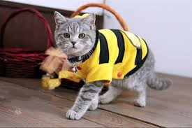 costume for cat bee costume for cats and dogs mass
