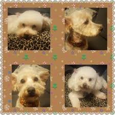 Bed And Biscuit Sioux City by A Bath N Biscuit Grooming U0026 Pet Spa 107 Photos U0026 55 Reviews