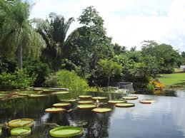 Speechless Sunday Naples Botanical Gardens Lake