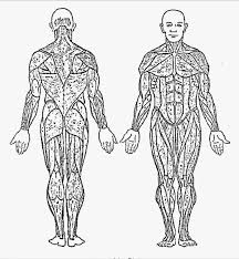 Human Anatomy Coloring Pages Gallery Image