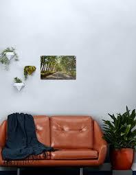 eukalyptus baum tunnel kauai hawaii metallbild