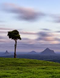 100 Tree Houses Maleny The Lone Of Print
