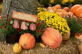 Pumpkin Patch Jacksonville Al by Gross Farms Home
