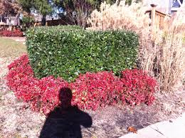 Landscape Design Principle No Texture Red Firepower Nandina ...