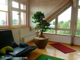 casa verde innen aussenbegrünung ag hydrokulturen