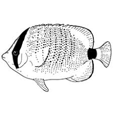Top 10 Free Printable Tropical Fish Coloring Pages Online