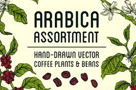 Arabica Assortment Illustrations Creative Market
