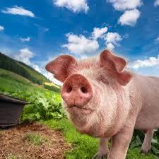 Les Jouets De Peppa Pig Unique Jouets