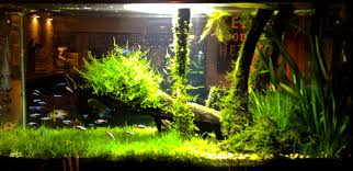 Night Time Shot Of My 30 Gallon 'Amazon' Planted Tank Set Up ... How To Set Up An African Cichlid Tank Step By Guide Youtube Aquascaping The Art Of The Planted Aquarium 2013 Nano Pt1 Best 25 Ideas On Pinterest Httpwwwrebellcomimagesaquascaping 430 Best Freshwater Aqua Scape Images Aquascape Equipment Setup Ideas Cool Up 17 About Fish Process 4ft Cave Ridgeline Aquascape A Planted Tank Hidden Forest New Directly After Setting When Dreams Come True