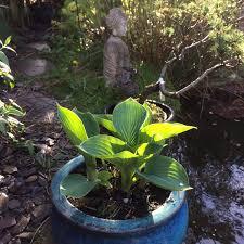 Zen Garden Stine Janvin