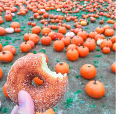 Pumpkin Picking Nj 2015 by 7 New Jersey Apple Orchards U0026 Pumpkin Patches Near Hoboken And