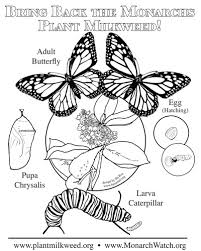 Coloring Page Simple Version Download Plant Milkweed Monarch Life