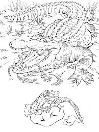 Kids Can Also See How Baby Alligators Hatch Out Of Eggs From These Drawings Description Coloring Pages For AdultsAnimal