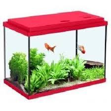 aquarium poisson prix aquarium avec filtre pour poisson achat vente aquarium