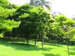 100 Pau Brazil Brasil Wood BoisdeFernambouc Arboretum