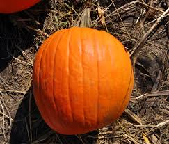 Best Pumpkin Patches Near Milwaukee by 28 Apple And Pumpkin Farms Near Milwaukee 28 266 Best