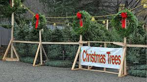 How To Sell Christmas Trees