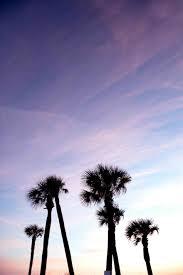 Rhwpnaturecom Es Sea Peoples Island Tropical Rhrenaturescom Beach Palm Trees Tumblr