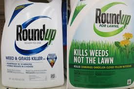 Traditional Roundup Weed And Grass Killer Shown Left Contains The Active Ingredient Glyphosate A Nonselective Herbicide That Kills Most Plants
