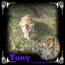 Free Tony The Tiger On | Pinterest | Tigers, Cat And Animal