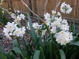 nurseries and catalogs of flowering bulbs wrkf
