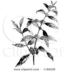 Clipart Of A Retro Vintage Black And White Coffee Plant