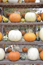Mccalls Pumpkin Patch Haunted House by Top 25 Best Spooner Farms Ideas On Pinterest Corn Maze Harvest