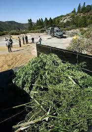 Editorial: Marijuana Growers Are Wrecking California July 6, 2015 ... Junkydvtagatuersautowckingfresnocalifornia Possible Suicide Invesgation On Sb Hwy 41 To Eb 180 Connector Used Cars In Fresno Ca Awesome 2018 New Honda Pilot Ex Awd At Wildwood Sierra For Sale Copart Ca Lot 38326028 All American Auto Truck Parts 4688 S Chestnut Ave Acura Dealership Sales Service Repair Near Clovis Salvage Yards Yard And Tent Photos Ceciliadevalcom More Of The 100acre Vintage Junkyard Turners Transforming 1968 Chevy Farm Truck Show Stopper Western Michael Chevrolet In Serving Madera Selma Wrecking Barn Find Hunter Ep 3 Youtube Editorial Marijuana Growers Are Wrecking California July 6 2015