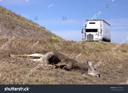 Deer Hit By Passing Truck Stock Photo (Royalty Free) 175574912 ... Kinard Trucking Inc York Pa Rays Truck Photos Zk Towing Llc In Phoenix Arizona 85017 Towingcom Bc Big Rig Weekend 2011 Protrucker Magazine Canadas 2013 Driving Jobs Red Deer Best Waterallianceorg American On Highway Stock Rebel Energy Services Ltd Total Oilfield Rentals Calgary Alberta A Prime Mover Images Alamy Harvey1jpg 2012