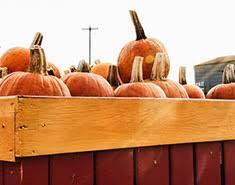 Pumpkin Picking In Waterbury Ct by Crumland Farms