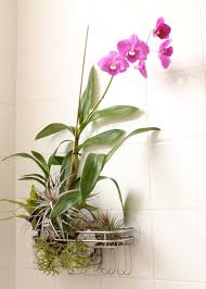 Fake Plants For The Bathroom by Bathroom Design Wonderful Bathroom Plant Stand Indoor Plants For