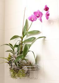 Best Bathroom Pot Plants by Bathroom Design Fabulous Hanging Plants In Bathroom Bathroom