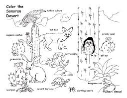 Best Desert Animal Coloring Pages 28 With Additional Drawing