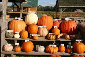 Pumpkin Patch Farms Mississippi by Home