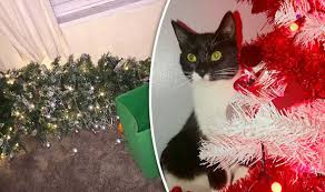 Are Christmas Trees Poisonous To Dogs Uk by Unruly Pets Sabotage Christmas Decorations And Presents Nature