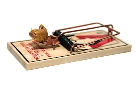 tom cat mouse trap mice eradication has not been completed octopus overlords