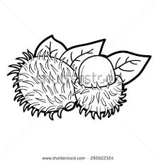 Coloring Book Fruits And Vegetables Rambutan