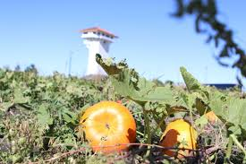 Omaha Pumpkin Patch by Prime For The Picking Pumpkin Patches Just One Of Haunted